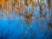 Abstraction Of Trees Reflected