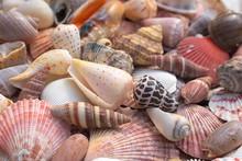 Paint Seashells.