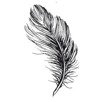 Feather Hand Drawn On White Background