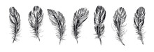 Feathers Set Hand Drawn On Whi...
