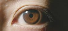 Macro Shot Of Brown Eye