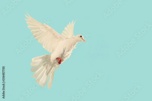 Foto En Lienzo - White Dove flying to blue sky in international day of peace concept and clipping path