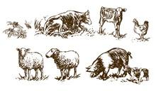 Set Of Farm Animals - Hand Dra...