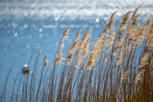 Reeds Into The Light