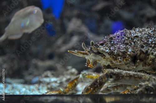 Crustacean at the bottom of the aquarium Canvas Print