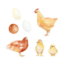 Chickens, Hens, And Eggs. Hand...