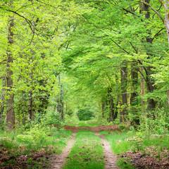 Panel Szklany Podświetlane Las Walkway in a spring forest in the Netherlands