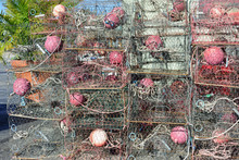 Crab Traps In Florida