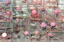 Crab Traps In Florida