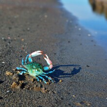 Colourful Blue Crab Toy On A B...