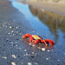 Colourful Red Crab Toy On A Be...