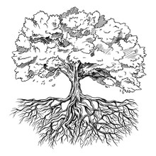 Spreading Tree With Leaves And Rootage, Hand Drawn
