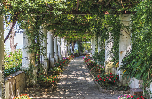 Vászonkép Beautiful floral passage with columns and plants overhead in garden in Anacapri,