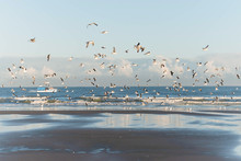 Group Of Seagulls Flying Over ...
