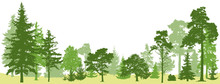 Tree Forest Vector. Isolated S...