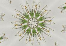 Green Lynx Spider Kaleidoscope