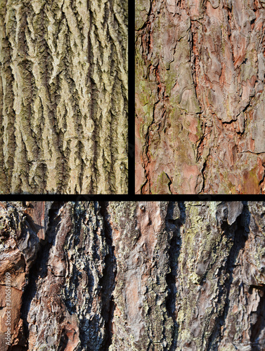 kora drzew