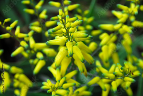 yellow color Flower in bloom in spring