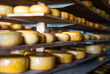 Traditional Dutch Gouda Cheese Maturing On Wooden Shelves