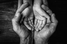 Adult Hands Holding Kid Hands