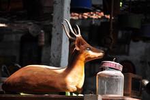 古道具屋の鹿