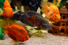 Beautiful Colorful Fish Swim I...