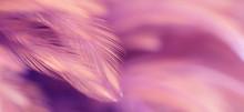 Blur Bird Chickens Feather Tex...