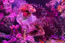 In The Zoo Aquarium, Wild Sea Creatures Living In The Ocean, Sea, Rivers And Lakes