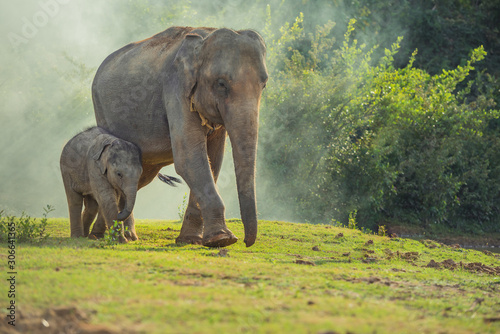 Asian elephant family walking together in the forest. Canvas Print