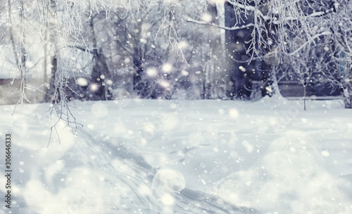 Fototapety, obrazy: Winter forest landscape. Tall trees under snow cover. January frosty day in the park.