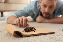 Man And Tarantula On Carpet. A...
