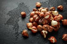 Tulip Bulbs With Little Shoots...