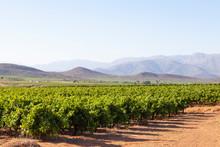 Vineyards In The Breede River ...