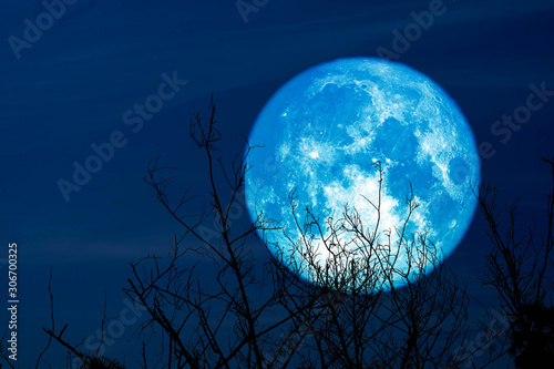 super full harvest moon on night sky back dry branch tree in the field Canvas Print