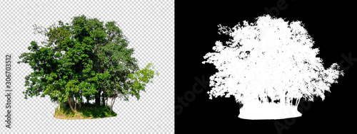 isolated tree on transperrent picture background with clipping path Fototapet