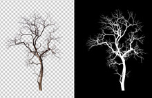 Isolated Death Tree On Transperrent Picture Background