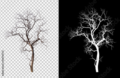 isolated death tree on transperrent picture background Canvas Print