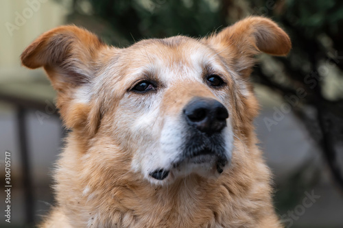Close-up portrait of a simple funny but smart mongrel dog Canvas Print