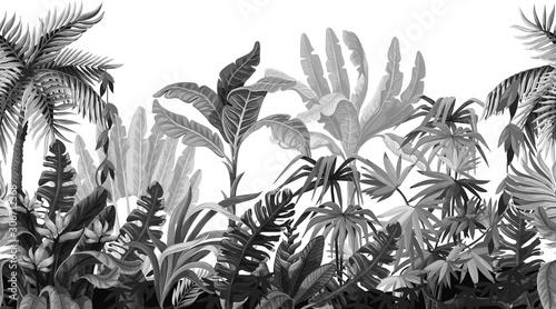 Obraz premium Granica z drzewami dżungli w stylu monochromatycznym