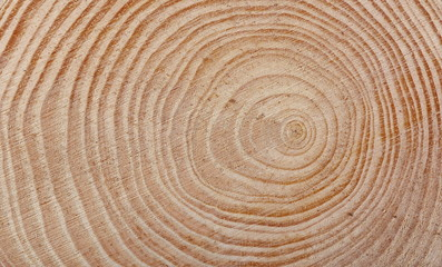 Cross section of tree trunk background and texture