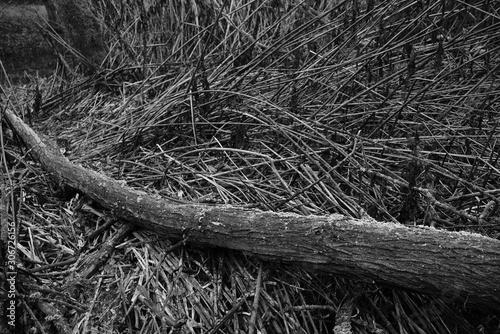 Foto auf Leinwand Darknightsky Wildnis Schiff und Baumstamm