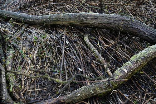 Foto auf Leinwand Darknightsky Natur und Umwelt Backdrop