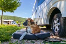 Hund Vor Dem Wohnmobil