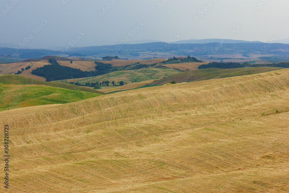 Summer trip to the vineyards and cypress trees. View of the green and yellow hills in Tuscany in Italy.