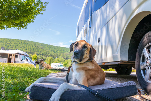 Fotografie, Obraz Hund vor dem Wohnmobil