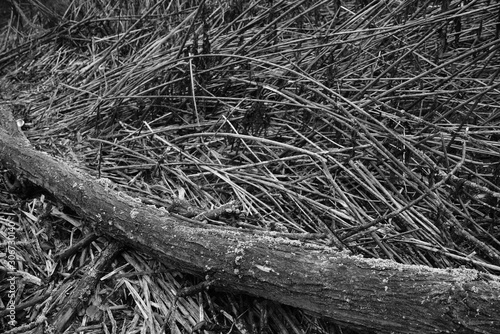 Foto auf Leinwand Darknightsky Wildernes nearby a river