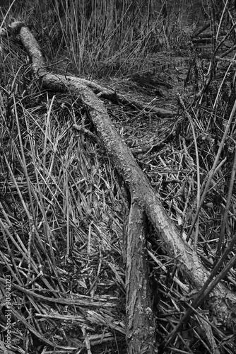Foto auf Leinwand Darknightsky Schilf Umwelt Raum