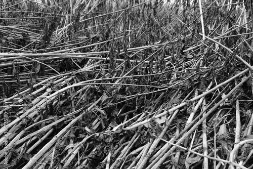 Foto auf Leinwand Darknightsky Umweltschutz Hintergrund