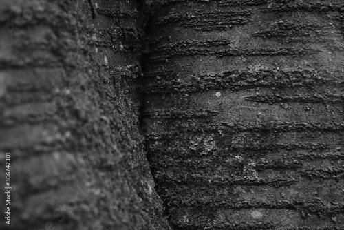 Foto auf Leinwand Darknightsky Prunus tree detail