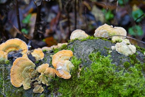 Foto auf Leinwand Darknightsky Herbst Baum Pilz